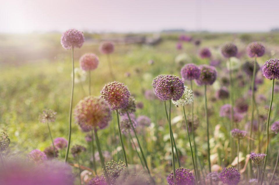 Bloemen fotoshoot